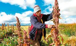 Foto de Empresa Agroindustria Orgánico del Perú