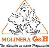 MOLINERA G&H  Lima
